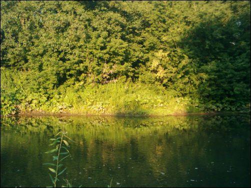 река инза фото